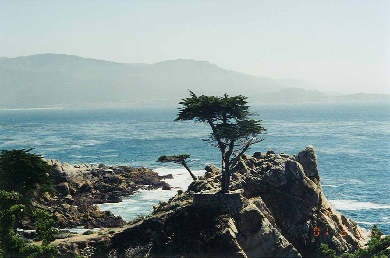Further north of Deetjens towards Carmel was the so-called 17-mile drive near the famous Pebble Beach golf course. A highlight of the drive was the Lone Cypress shown here