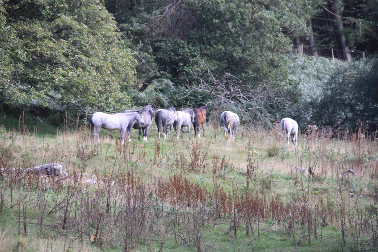 Further along the trail, it seemed like I had passed the sheep grazing areas as I started to notice horses
