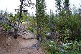 Adams_Falls_041_07282020 - Veering on the short loop back towards the East Inlet Trail