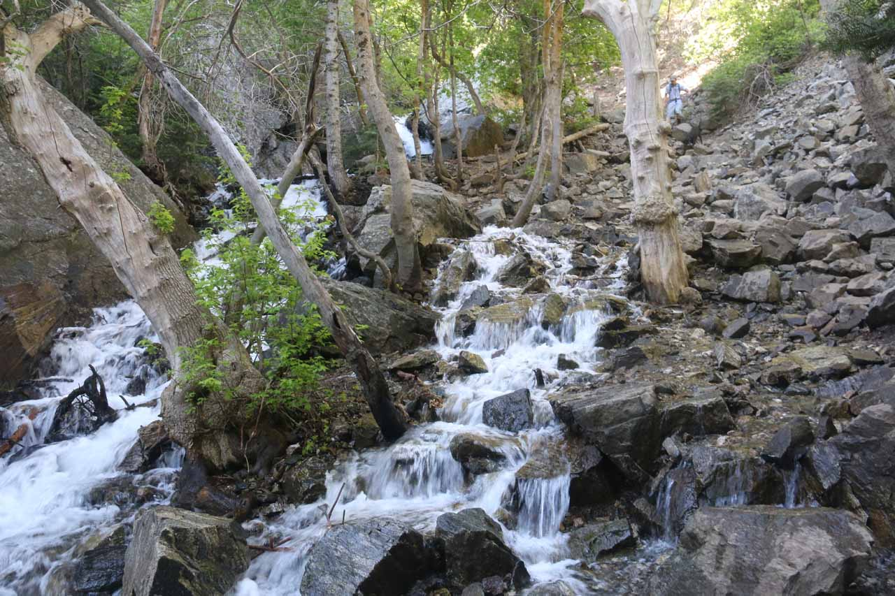 Climbing steeply alongside this attractive cascade on North Holmes Creek