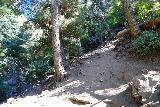 Adams_Falls_157_08092020 - Beyond the slanted bridge, the Adams Canyon Trail became pretty rough pretty fast