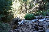 Adams_Falls_228_08092020 - Descending along North Fork Holmes Creek on the way back from Adams Falls along the Adams Canyon Trail in mid-August 2020