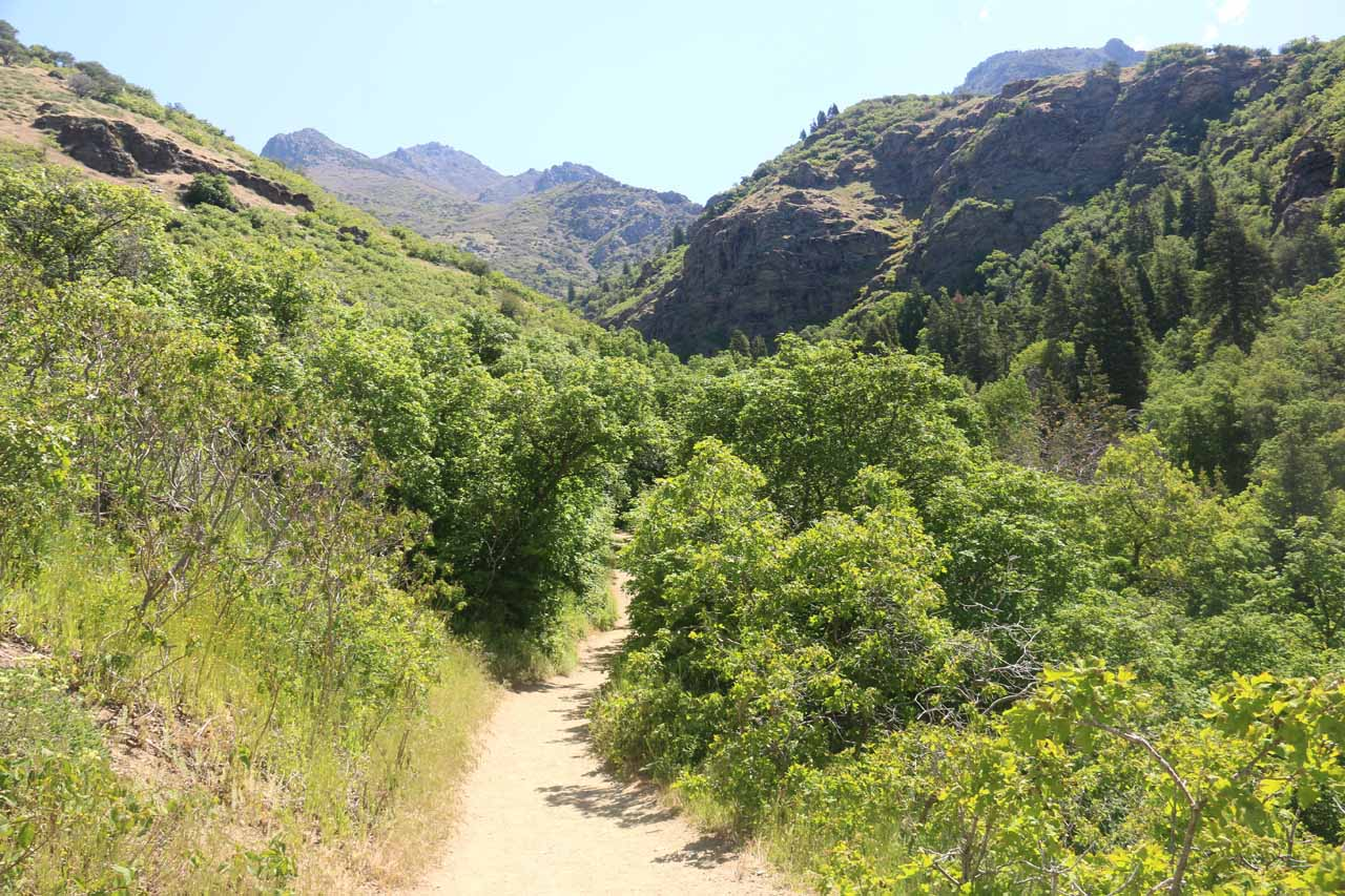 Entering the tree cover within Adams Canyon, which provided some partial shade and temporary relief from the sun