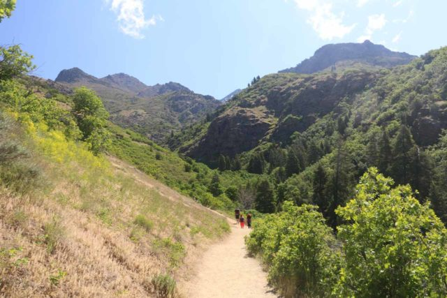 Adams_Falls_250_05272017 - After all the switchbacks in the beginning and deviating from the Bonneville Shoreline Trail, the Adams Canyon Trail then entered Adams Canyon
