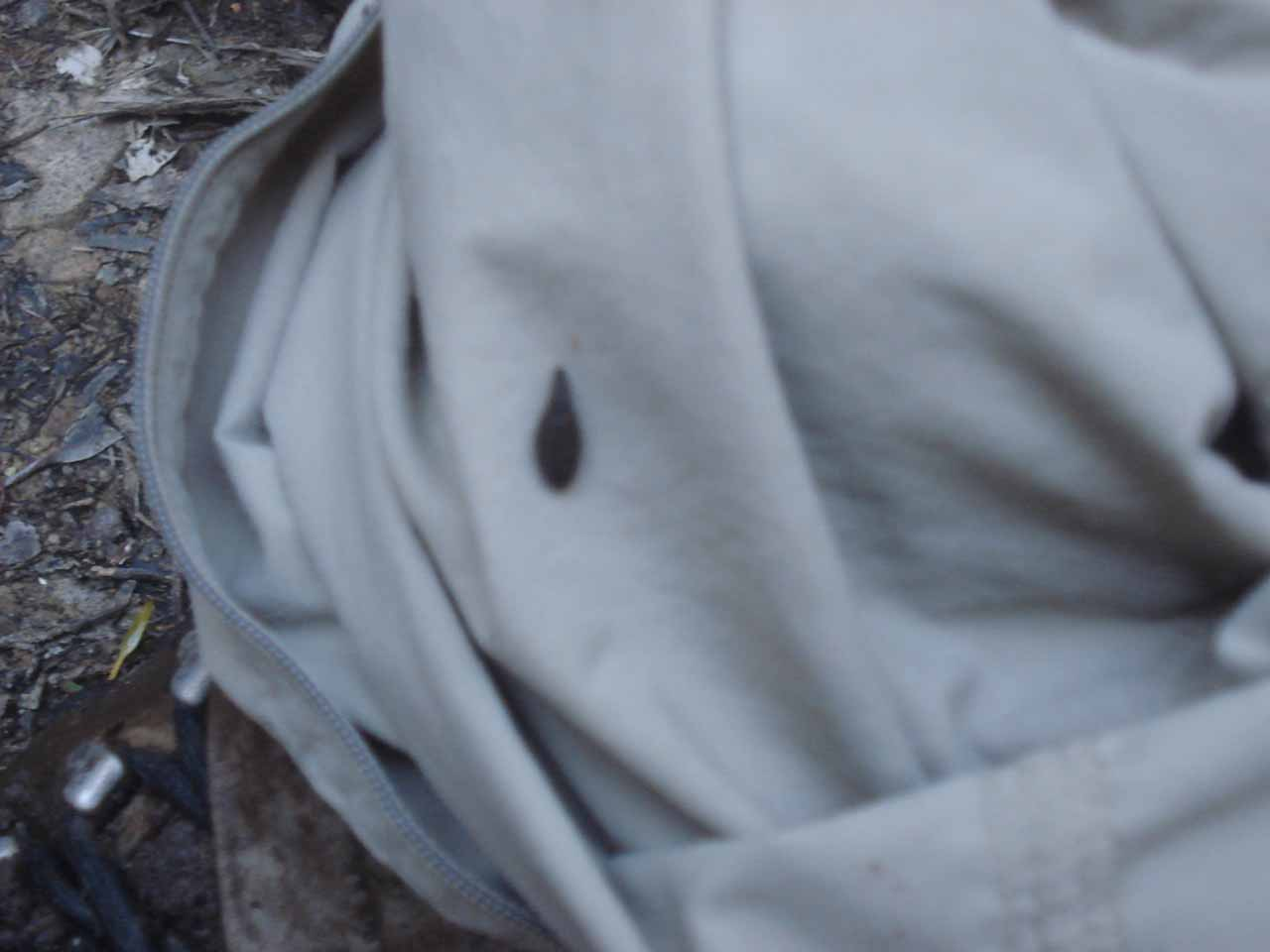 That blurry blotch on my hiking pants was actually a leech that managed to take some blood from me