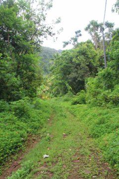 Afareaitu_Waterfalls_071_20121219