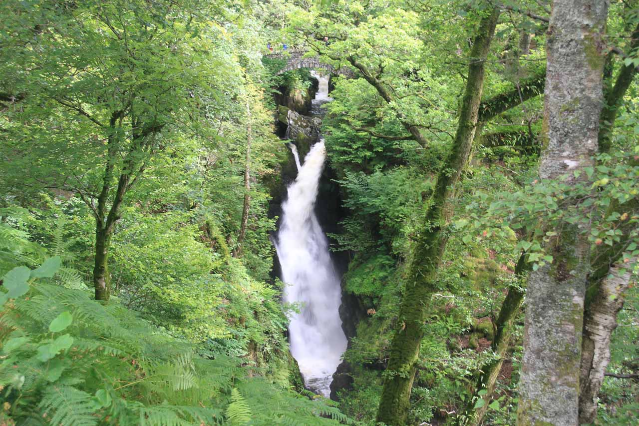 This was our first look at Aira Force where we had a choice between continuing towards the bridge at its top or descending steps to get to the base of the waterfall