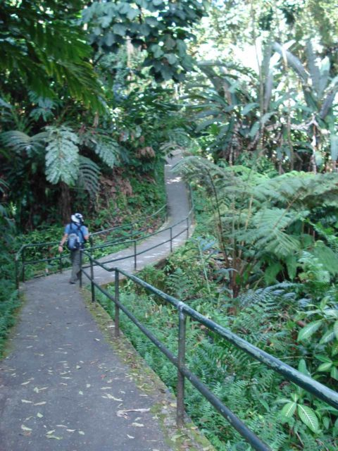 Akaka_Falls_005_jx_03092007 - On the well-developed paved walkway leading to the overlook of Akaka Falls