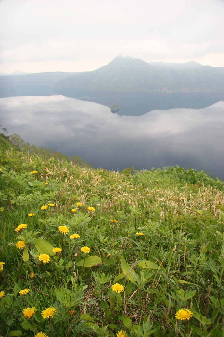Wildflowers blooming before Lake Mashu
