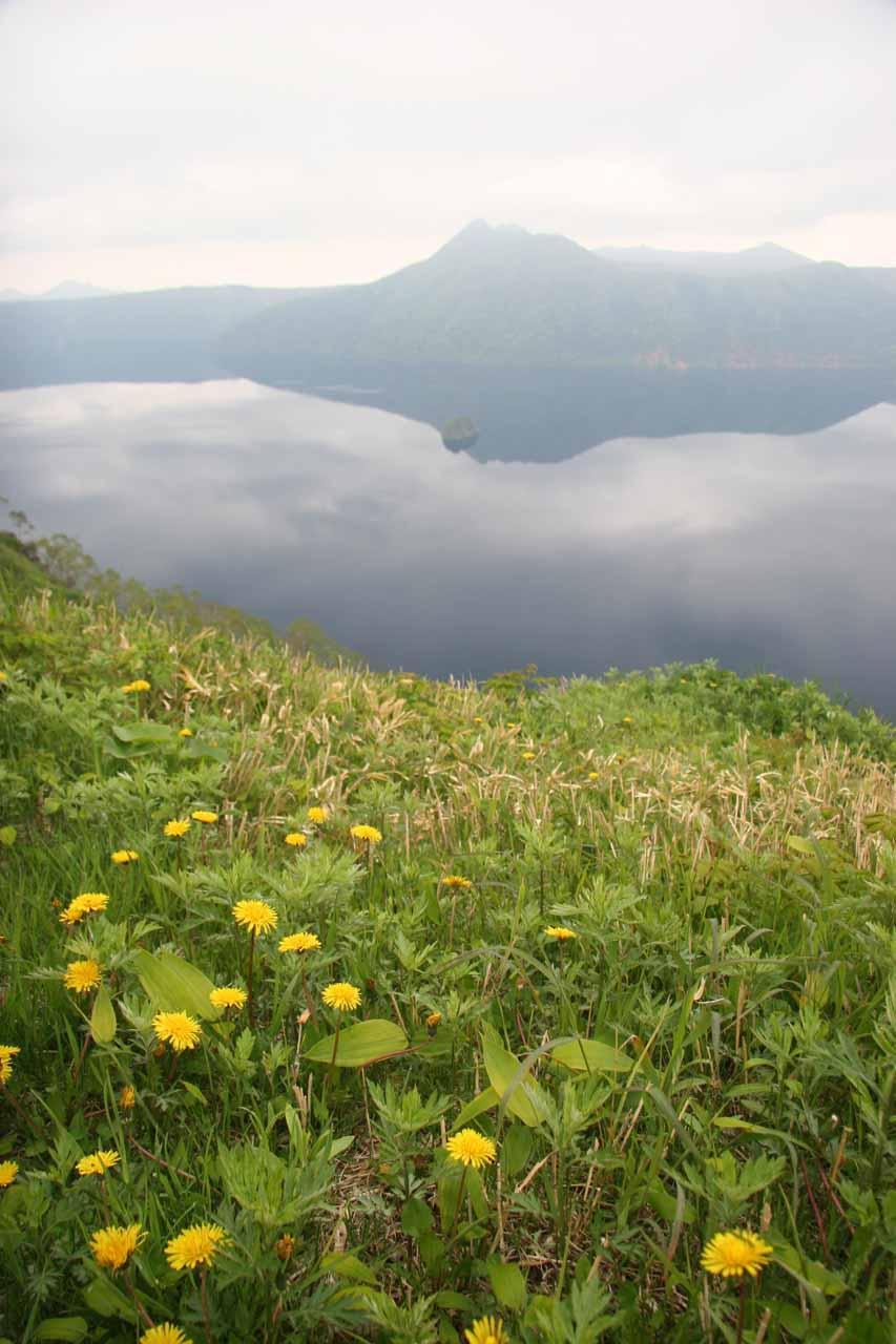 Wildflowers blooming before Lake Mashu