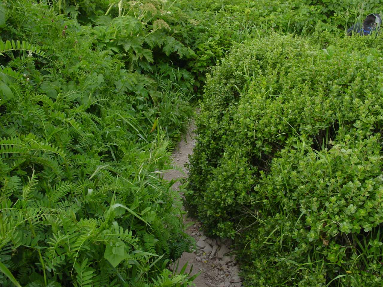 Within the thin and narrow and overgrown part of the trail