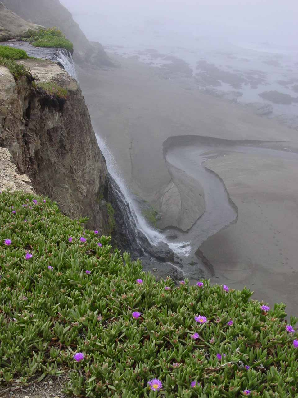 Our last look at Alamere Falls over what appeared to be ice plants