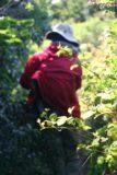 Alamere_Falls_047_04082010 - Julie rubbing elbows with poison oak