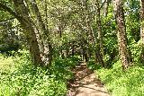 Alamere_Falls_095_04192019 - The hike to Alamere Falls continuing to meander through a forested area as seen during my April 2019 visit
