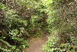 Alamere_Falls_123_04192019 - Going through some still-narrow and overgrown parts of the final stretch of the Alamere Falls hike in April 2019