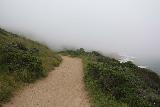 Alamere_Falls_224_04192019 - Indeed, the fog had definitely taken over by the time I got back to the open part of the Coast Trail on the way back from Alamere Falls during my April 2019 hike