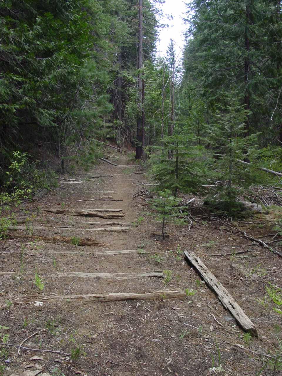 Railroad tracks on the trail