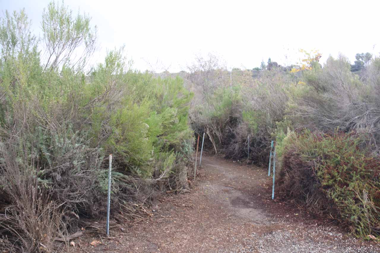 This was the unpaved spur path leading to the Aliso Viejo Waterfall