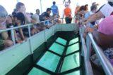 Amedee_147_11302015 - Context of the glass-bottomed boat tour