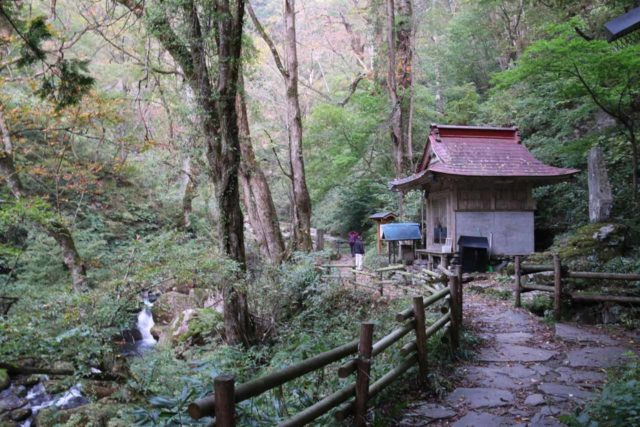 Amida_Falls_020_10212016 - Dad on the walk to the Amidagataki, which went past this shrine along the way