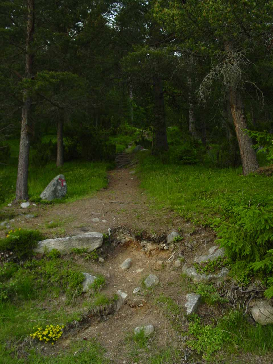 Following the spraypainted red Ts while still on the forested trail to Linndalsfossen