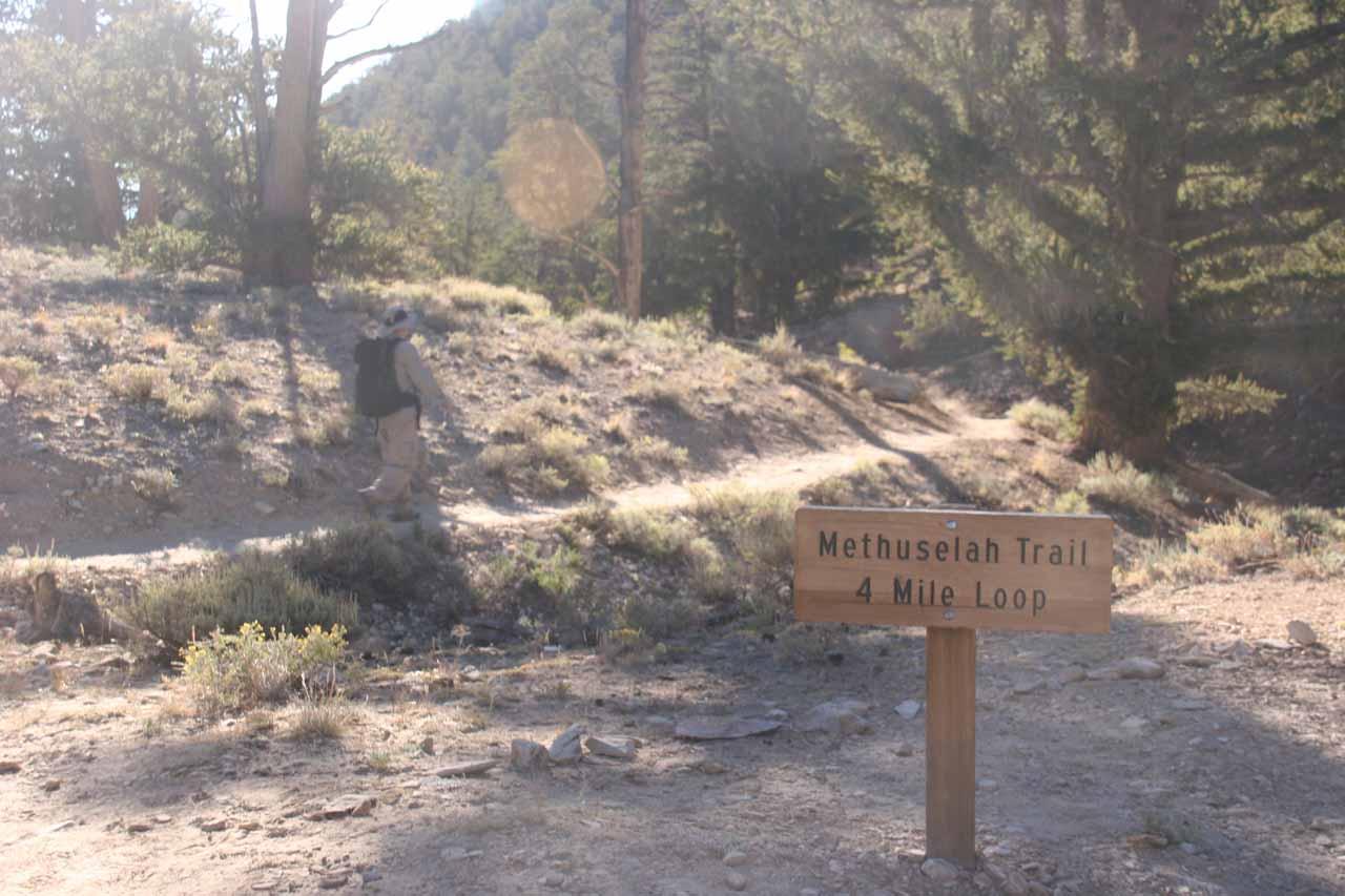 On the Methuselah Trail