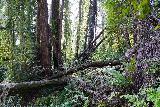 Andrew_Molera_Falls_073_02072021 - Scrambling back among the chaos as I was leaving Andrew Molera Falls