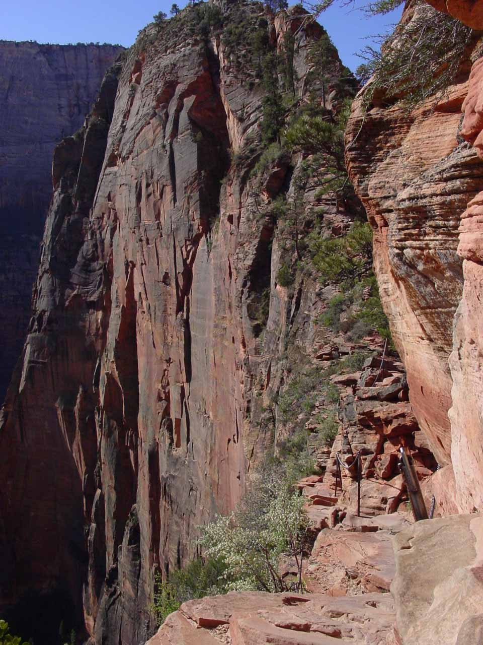 Severe cliff exposure as we attempted the final quarter-mile scramble to the summit of Angel's Landing