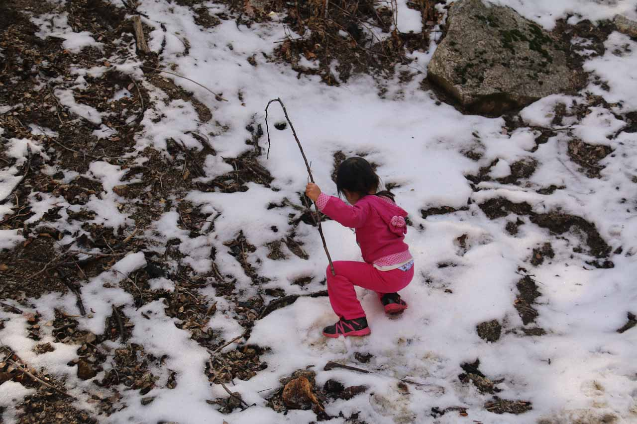 Tahia enjoying the patch of snow by Cold Creek Falls