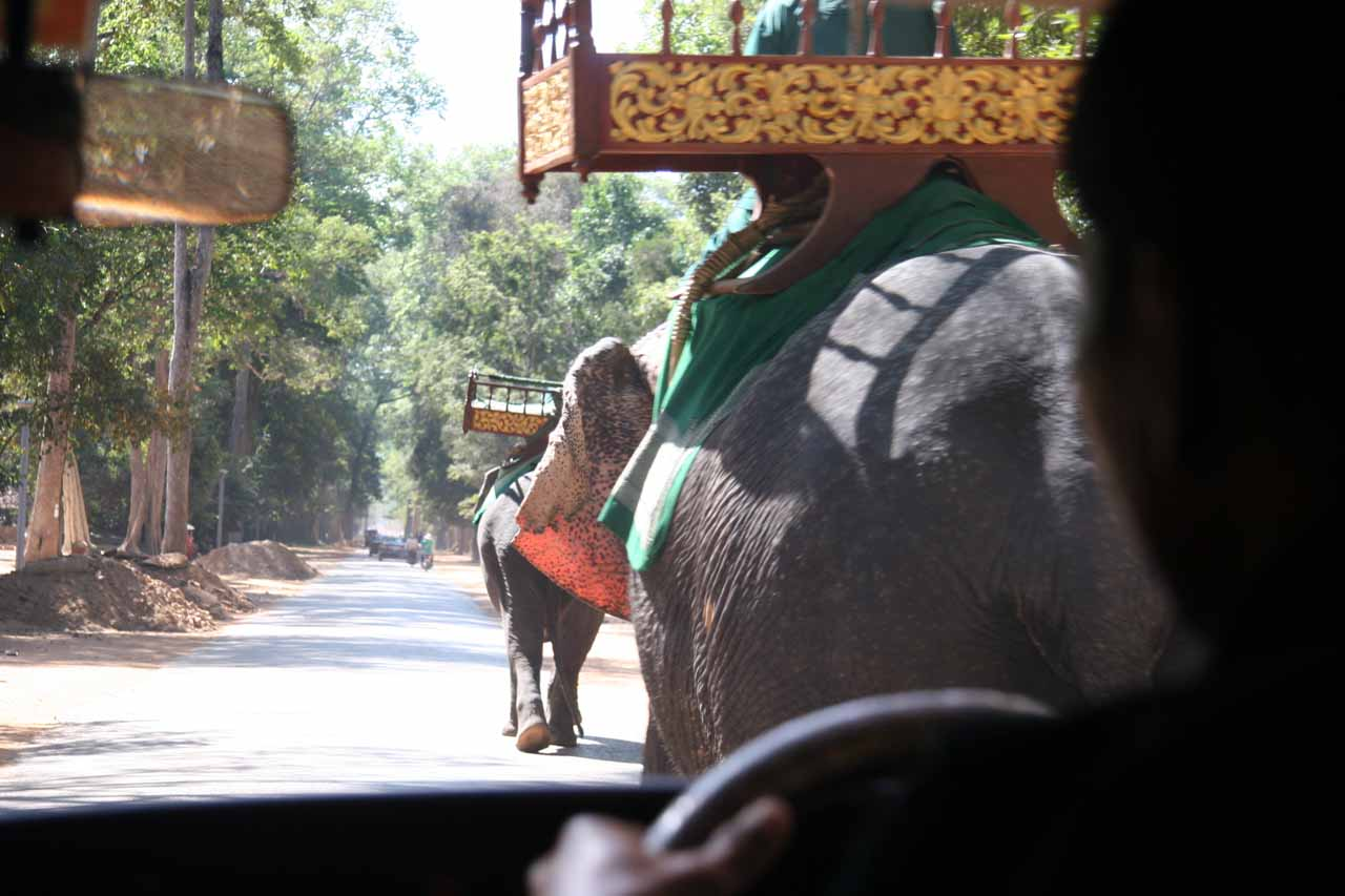 Passing elephants while we're riding in the replacement car out of Angkor Thom
