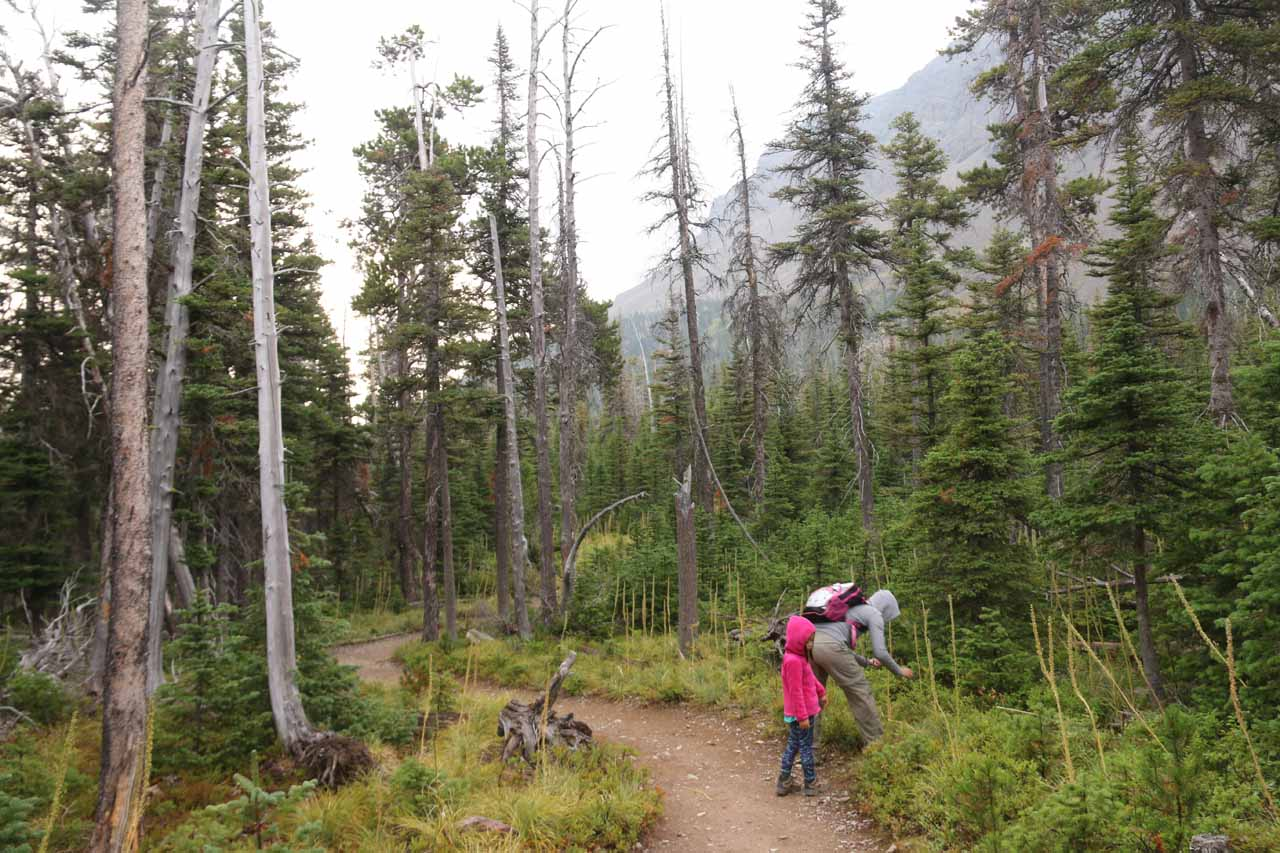 Julie and Tahia busy picking huckleberries along the Appistoki Falls Trail