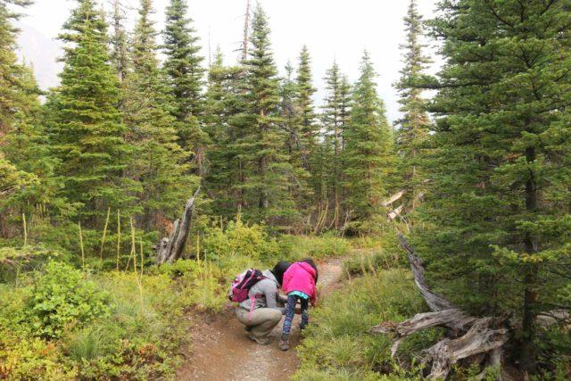 Appistoki_Falls_079_08082017 - Julie and Tahia picking huckleberries along the Appistoki Falls Trail