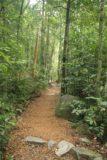 Araluen_005_05122008 - Julie way ahead of me as we were walking within the rainforest towards Araluen Falls