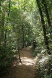 Araluen_006_05122008 - Julie still making her way along the established walking track amongst the peaceful rainforest of Eungella National Park