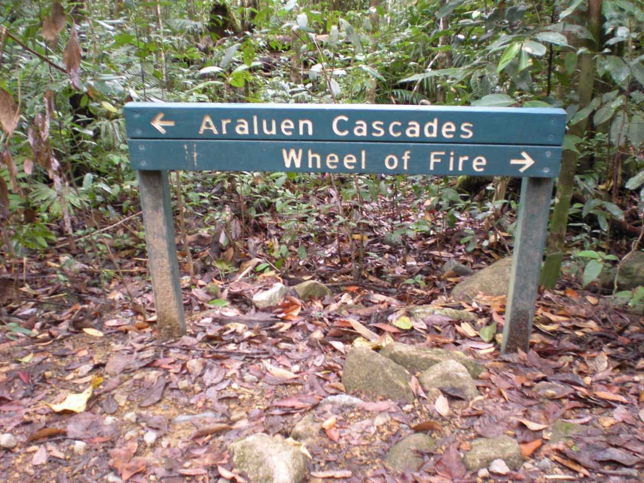 We eventually made it to a junction where we could choose between going to Araluen Cascades or continue to the Wheel of Fire