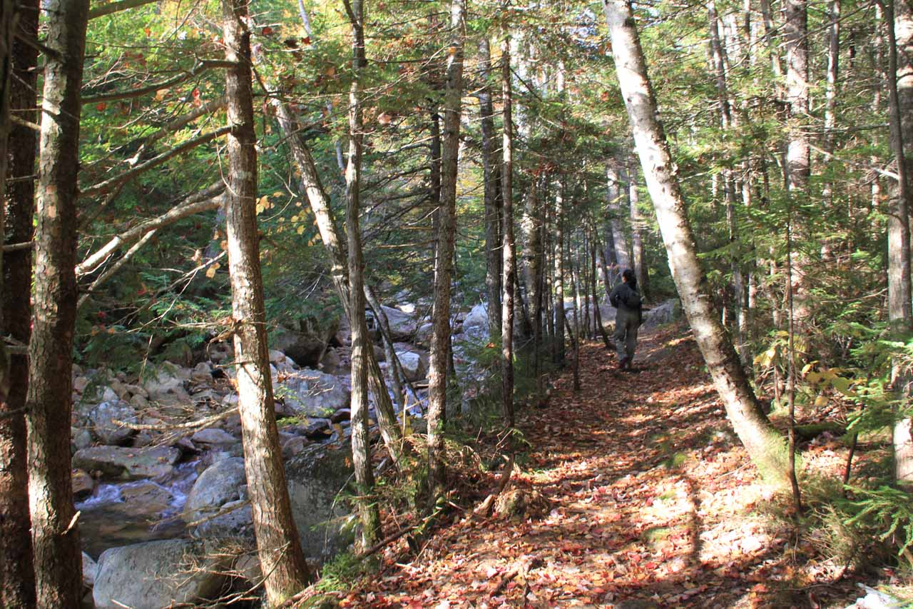 It wasn't long before the trail paralleled the Bemis Brook