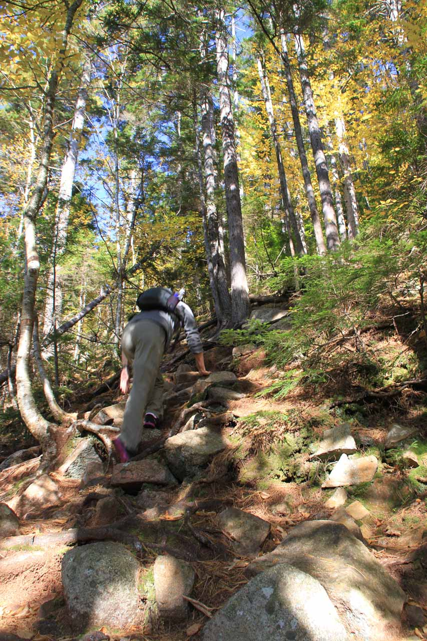Julie using all fours to ascend the steep path up to the Arethusa Falls Trail