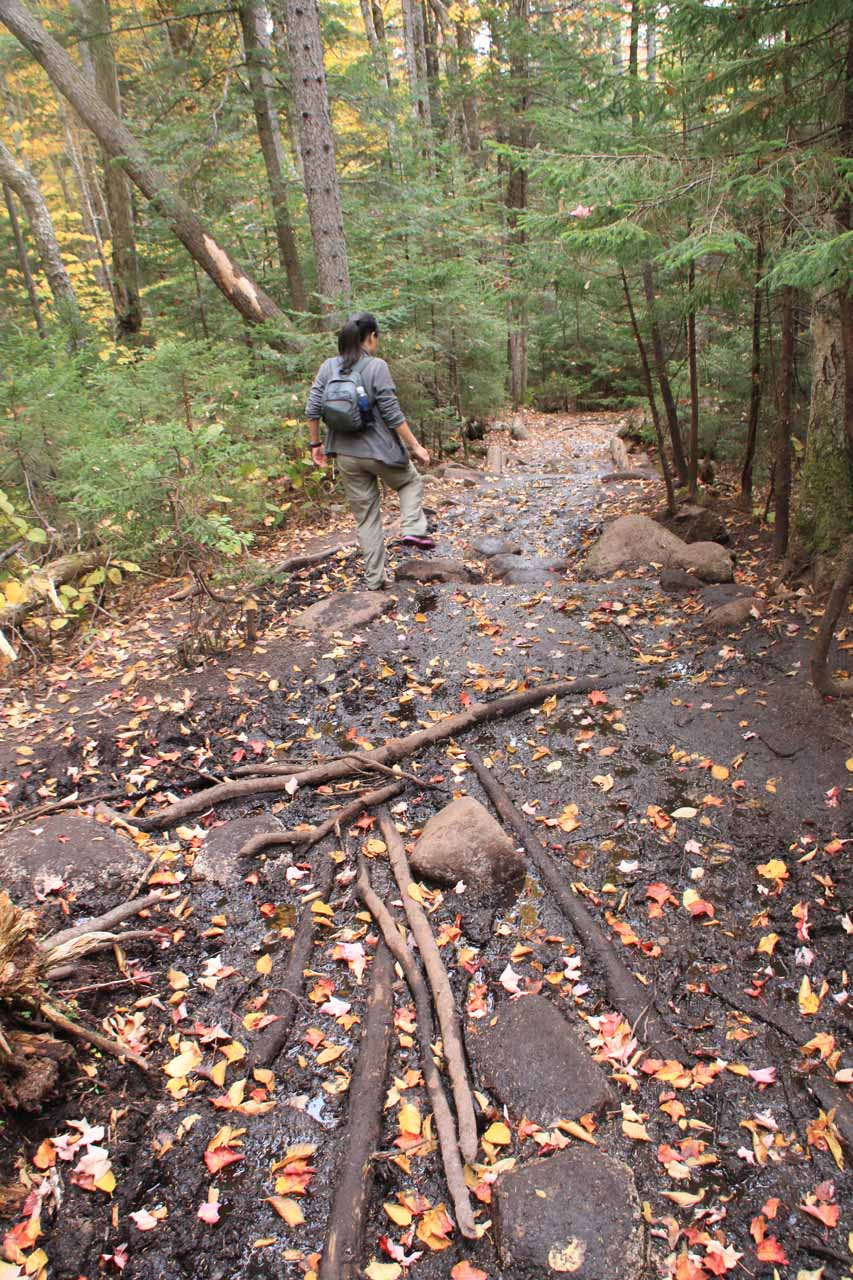 Julie dealing with a muddy section on the Arethusa Falls Trail