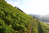 Bacharach_292_06162018 - Continuing along the trail through the vineyard towards the ruins of Spitzer Turm or Pointed Tower