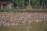 Backwaters_011_11182009