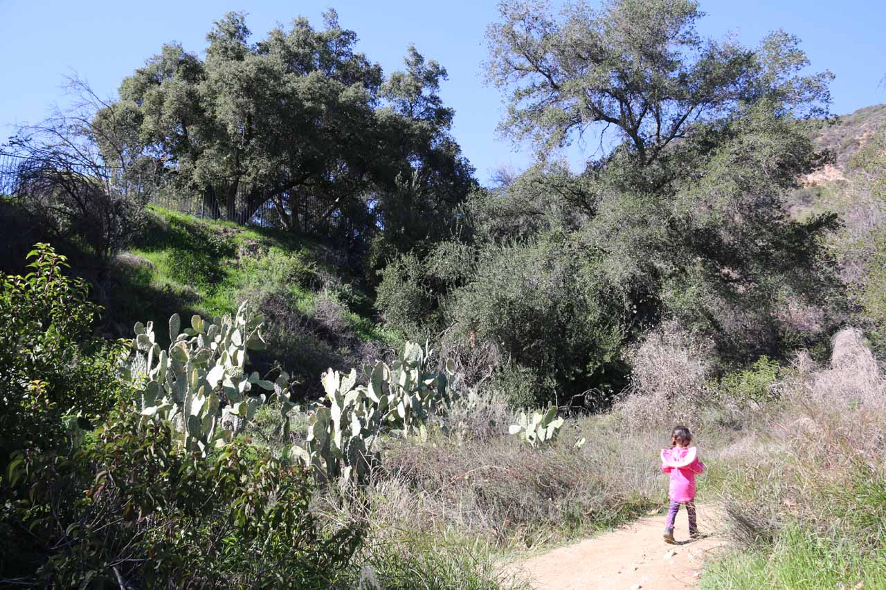 Tahia walking by a grove of cacti, which hinted at how arid this area can be