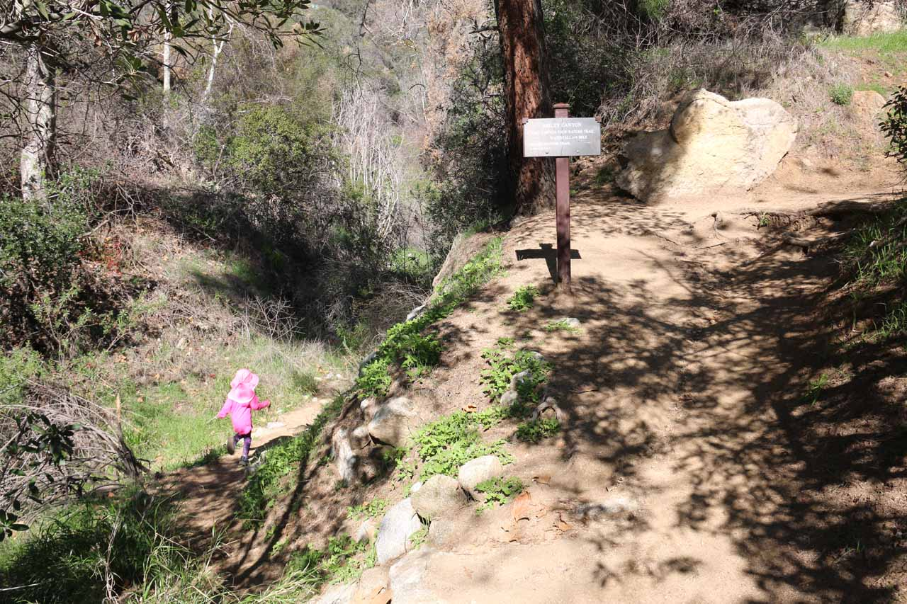 At this signposted trail junction, we went left into the creek, which would continue for another quarter-mile to Bailey Canyon Falls