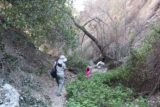 Bailey_Canyon_078_02062016 - Hiking back from Bailey Canyon Falls as Tahia didn't need prompting to get through the poison oak with minimal skin exposure