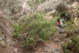 Bailey_Canyon_Falls_034_01212017 - Tahia on the correct trail as we were ascending above the landslide and continuing further upstream in Bailey Canyon