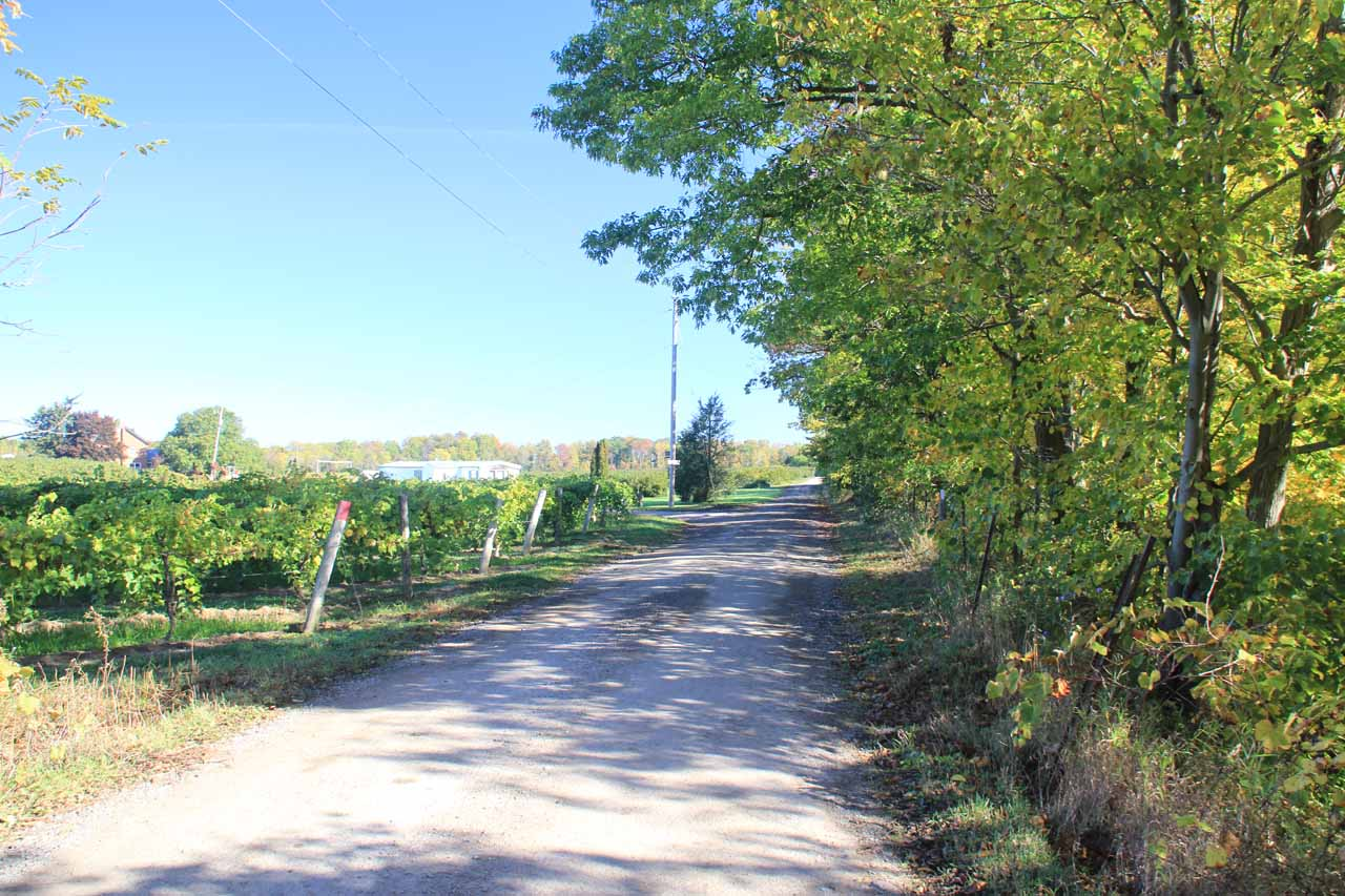 Walking along the road next to the agricultural field
