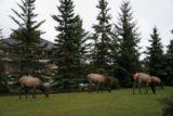 Banff_Town_012_09162010