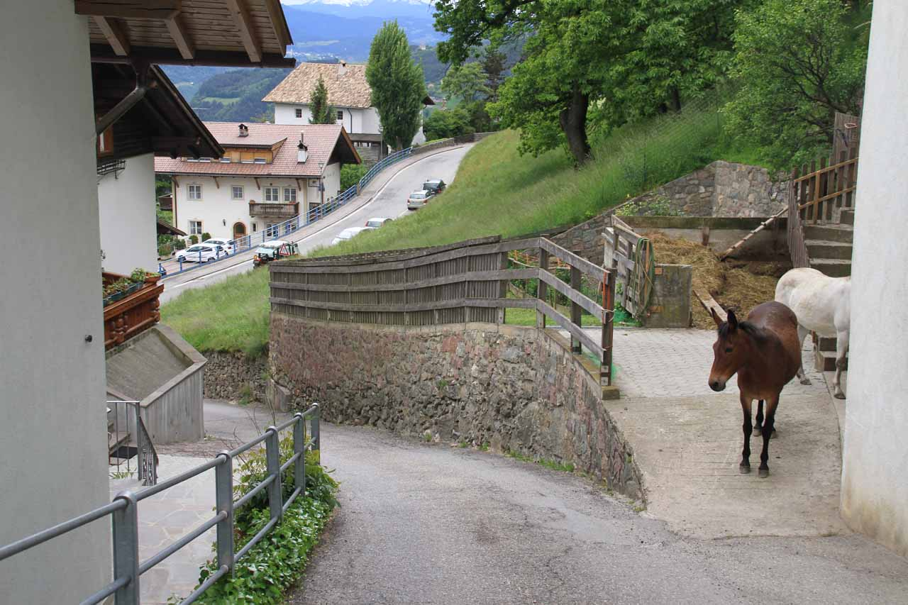 Going past some mules or horsies as I was back on the steep and narrow Wasserfallweg near our parked car in the distance