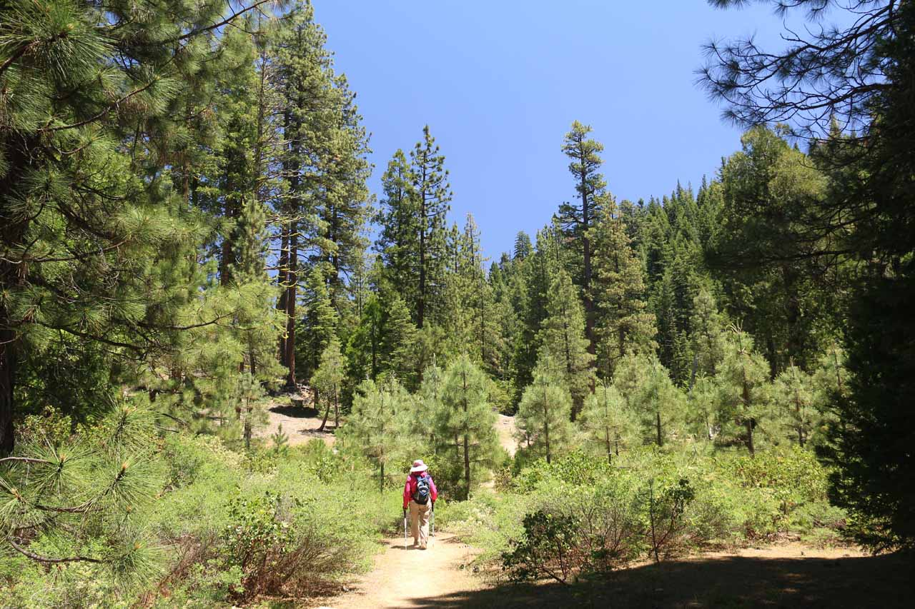 The relatively flat trail alternated between open forest sections like this and shadier sections providing a little more relief from the hot midday sun