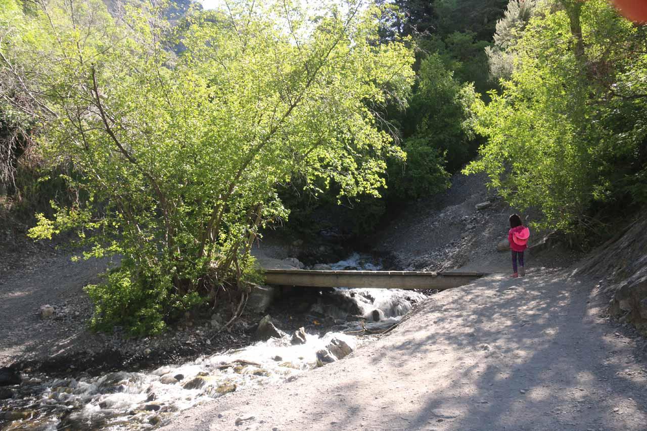 Tahia approaching a footbridge over Battle Creek