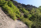 Battle_Creek_Falls_045_05282017 - Tahia going up a steep part of the Battle Creek Trail